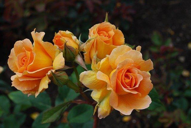 blossom-652637_640