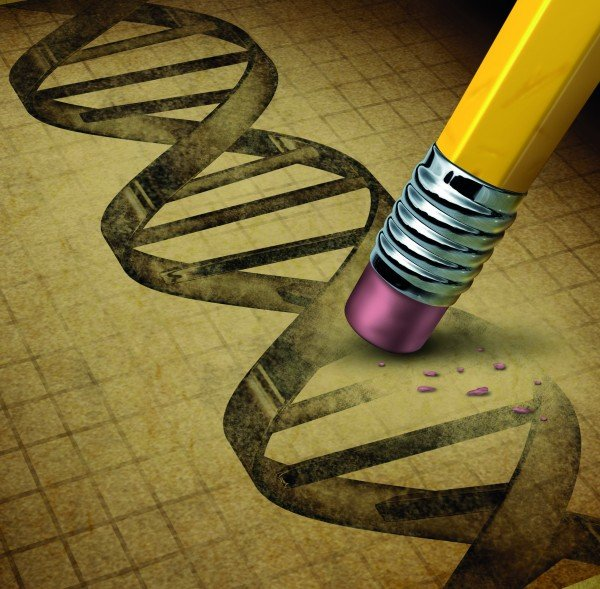 Genetic engineering and DNA manipulation as the biotechnology science of genetically modified foods or living organisms with an