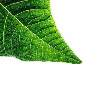 organic-315144_640