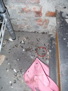 Rat droppings on restaurant floor.