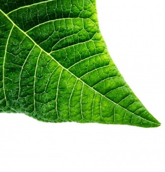 ISO 14001: it starts with leadership